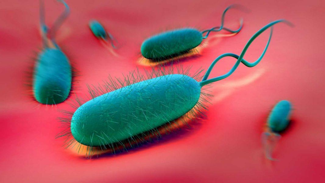 Aditivos antimicrobianos_TNS Nano