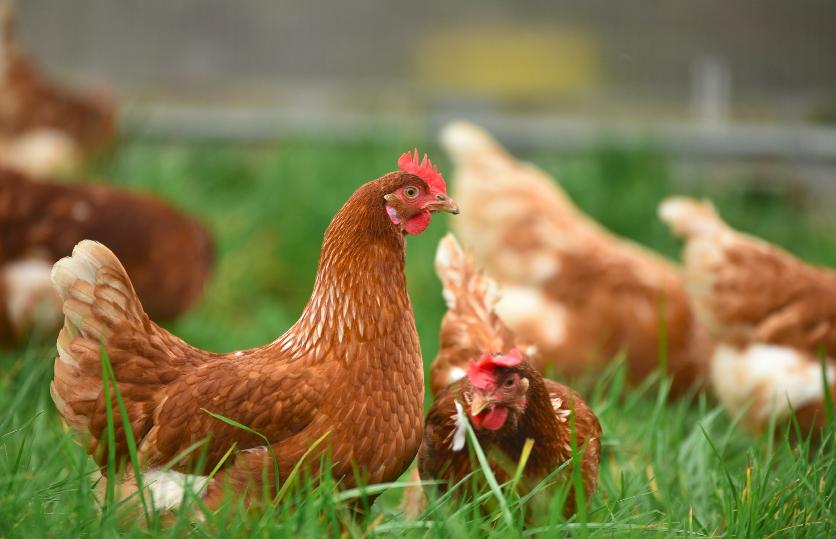 bioseguridad agrícola